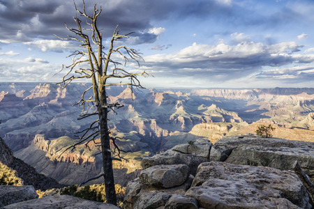grand canyon south rim landscape with a dead tree in the evening, Arizona, USA Reklamní fotografie
