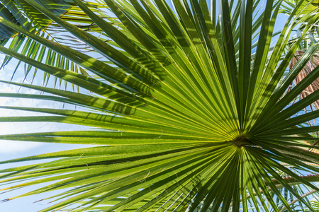 abstract repetitive pattern, light and shadow on backlit sugar palm leaf and coconut leaf, natural background Stock Photo