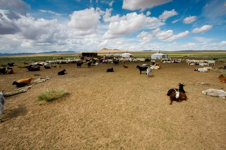 モンゴルの風景