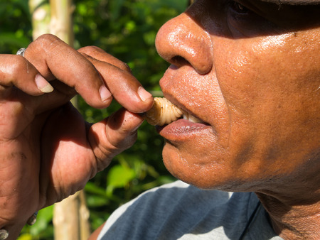 The jungle, Indonesia - January 14, 2015: A local eating a white  larva. This is a great treat there