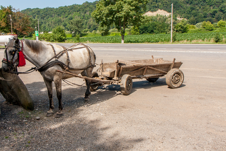tractive: A Workhorse harnessed to the cart is a typical transportation in the Romanian village