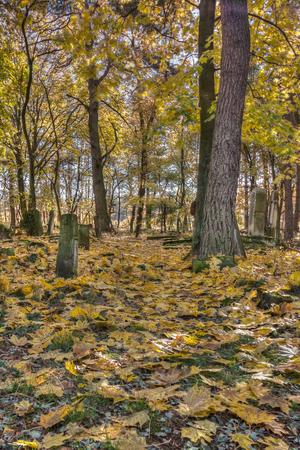 tumulus: Otwock, Poland - October 28, 2015:  Devastated Jewish cemetary in Otwock town