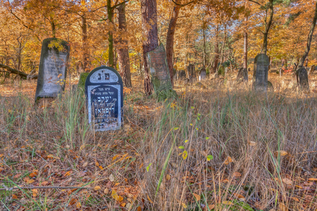 unmarked: Otwock, Poland - October 28, 2015:  Devastated Jewish cemetary in Otwock town