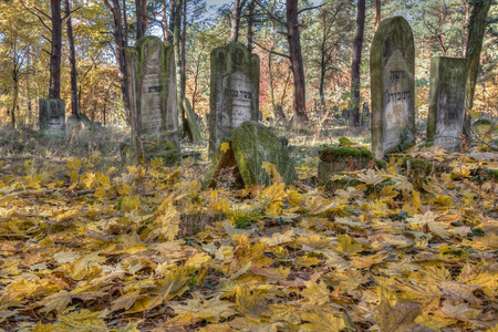 jewish town: Otwock, Poland - October 28, 2015:  Devastated Jewish cemetary in Otwock town