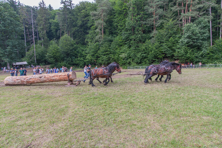 tractive: Rasnov, Romania - July 04, 2015:  Village fete. Competition in pulling giant trees by horse-drawn vehicles Editorial