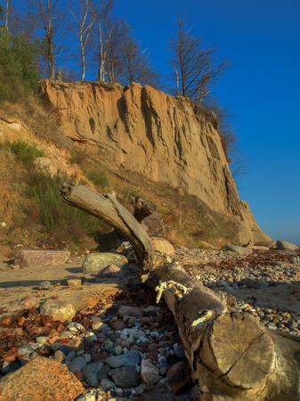 steep: Fallen tree trunk at a steep escarpment of the Baltic Sea