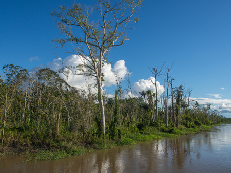 Amazon River, Peru - May 13, 2016:  Jungle on the bank of the Amazon River