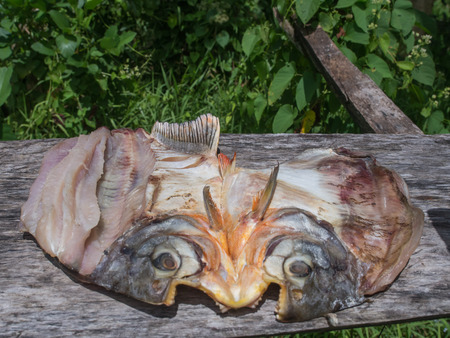 Piranha drying  on the sun in the Amazon jungle.