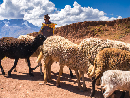 raiser: Moray, Peru - May 20, 2016: Peruvian Indian farmer with his sheep in the Sacred Valley