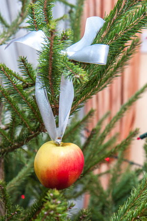 kneecap: Christmas apple on the natural Christmas tree