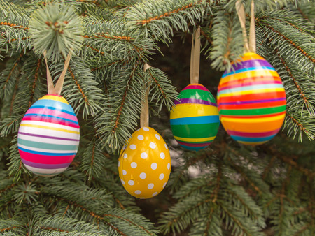christmas pussy: Colourful Easter eggs on Christmas  tree
