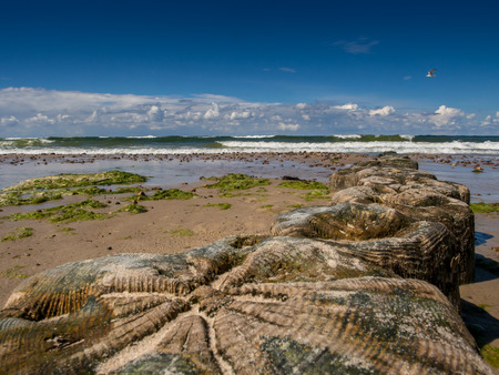 Wooden breakwaters on a shore of the Baltic Sea Stock Photo