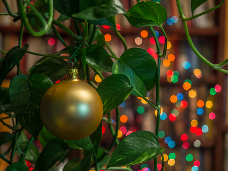 Christmas bauble on the plant over dark background with colorful, blurred  lights (bokeh) and library.
