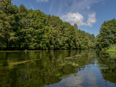 Trees and clouds reflecting in a water. Wda river canoeing trip