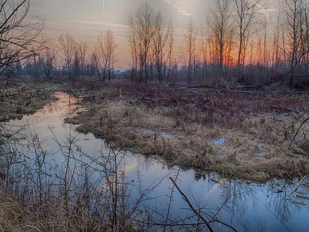 Pool near teh Vistula River in the nature reserve in Poland.
