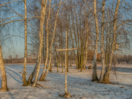 Birch tree Cross  in the light of morning, winter sunshine with  birch grove in a background Stock Photo