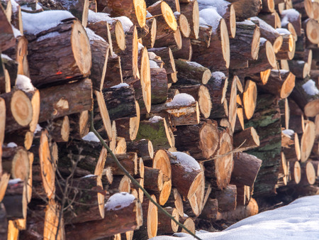Lying a  heap of cut and colour marked  and numbered  tree trunks  in the forest. Reklamní fotografie