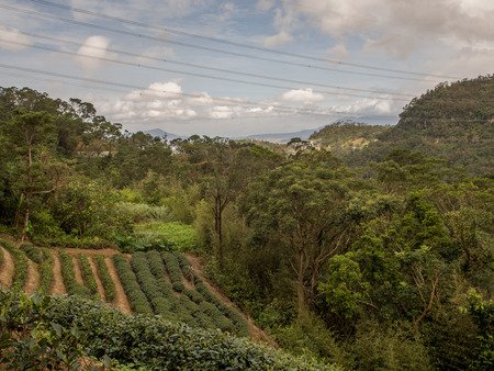 View for the tea plantation  on the hills of Maokong  in Taiwan