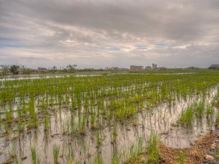 Rice fields after harvest between dwellings in Yilan, Taiwan