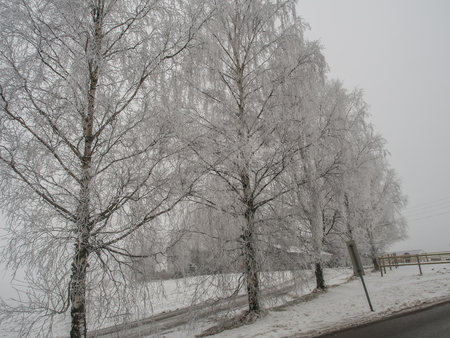 White, frosted trees in winter Stock Photo - 95690789