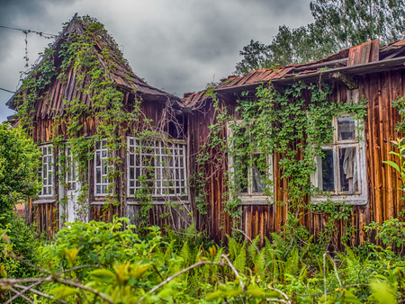 Abandoned, wooden house cover with the ivy at polish village