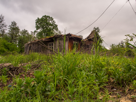 Village, Poland - May  21, 2017: Abandoned, wooden house cover with the ivy at  polish village