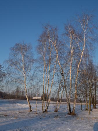 Betulle e croce sul campo coperto dalla neve. Inverno nevoso in Polonia. Archivio Fotografico