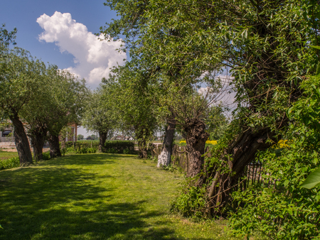 Spring garden in the village surrounded by weeping willows