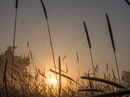 Spider web in the background of the sunrise. Spring landscape 版權商用圖片