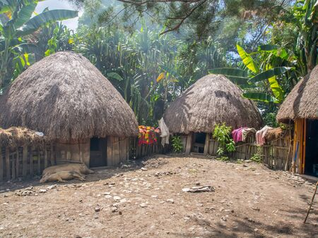 Wamena, Indonesia - January 23, 2015: Cottage covered with dry leaves of banana in the Dani tribe village.  Also spelled Ndani. Dani tribe home in Baliem Valley, West Papua 報道画像
