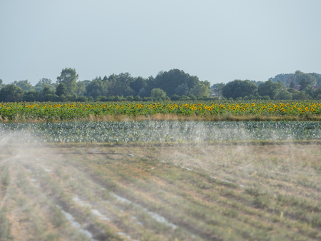 Watering the field in the dry season during the summer in the small village near the Warsaw Stok Fotoğraf