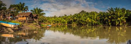 Indonesian jungle, Kokoroba Teluk Arguni, Kaimana, West Papua, Indonesia