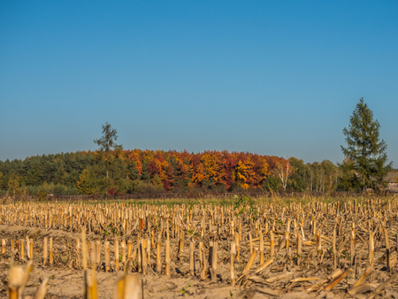 Colors of autumn in the polish country. Mazovia. Poland.