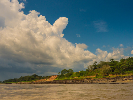 High bank of the Amazon river during the low water season. Amazonia. Brazil. South America. Banque d'images