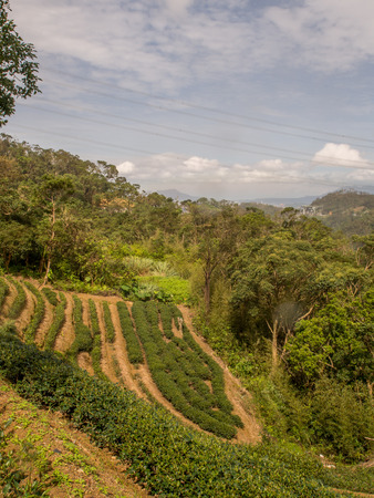 View for the tea plantation  on the hills of Maokong  in Taiwan. Asia. Reklamní fotografie
