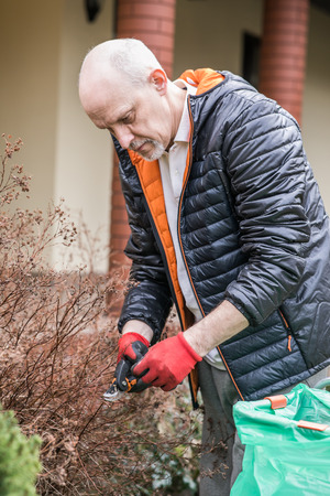 Mature man with a small beard during spring ordering, He is pruning branches in the garden, Reklamní fotografie