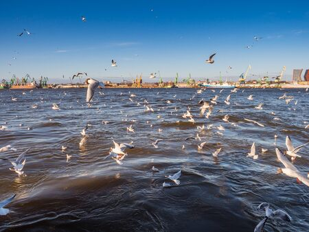 KÅ'ajpeda, Lithuania - April 06, 2018: Klaipeda port in Lithuania and gulls flying in the vicinity of the ferry crossing the Curonian Lagoon. Modern buildings in the background.