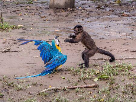 Hermoso guacamayo escarlata y mono en la selva. Foto de archivo