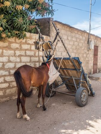 Senegal, Africa - January 30, 2019: A cart  and horse on the on the local street. 報道画像