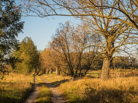 A country road among willows, in autumn. Mazovia. Poland. Stok Fotoğraf - 137486141