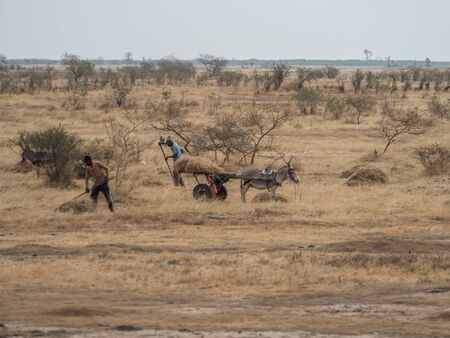 Senegal, Africa- January 26, 2019: Two men areworking on the field and using  donkey cart,  It is a popular transportation way in Africa Stok Fotoğraf - 137486625