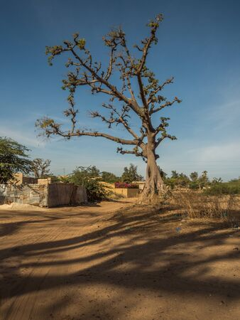 Baobab on the local sandy street.  Trees of happiness,Senegal. Africa. Stok Fotoğraf - 137489079