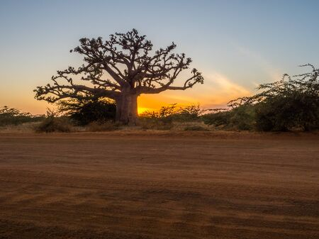 Silhouette of baobab tree at sunset with the yellow background. Tree of happiness, Senegal. Africa Stok Fotoğraf