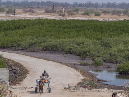 Senegal, Africa - January 24, 2019: Black man is riding horse cart on  the senegalese road. It is  popular transportation way in Africa.  Joal-Fadiouth town and commune in the Thiès Region at the end of the Petite Côte of Senegal. Africa. Editöryel
