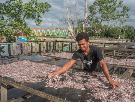 Kaimana, West Papua, Indonesia - February, 10 2017: A local man dries small fish on nets in Kaimana, fishing. Aktivitas menjemur ikan. Birds Head Peninsula, West Papua, Indonesia, Asia.