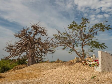Joal-Fadiout, Senegal - January, 26, 2019: Hugee baobab tree on the cemetery. Joal-Fadiouth town and commune in the Thiès Region at the end of the Petite Côte of Senegal. Africa.
