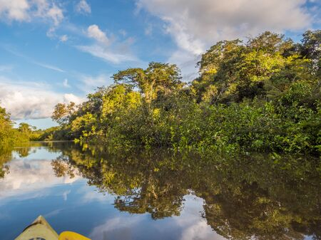 View of Coati Lagoon near the Javari River, the tributary of the Amazon River, Amazonia. Selva on the border of Brazil and Peru. South America. Stok Fotoğraf