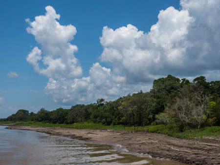 Loamy bank of the Amazon river in the low water season, dry season. Selva in Peru near Iquitos. South America. Amazonia. Zdjęcie Seryjne
