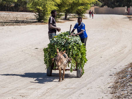 Senegal, Africa- Feb, 2019: Two man coming back from the field and using donkey cart, It is a popular transportation way in Africa