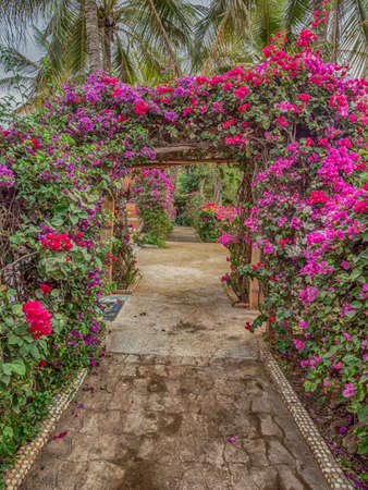 Senegal, Africa - January 24, 2019: Alley with red and pink flowers in a holiday resort in Senegal in West Africa.